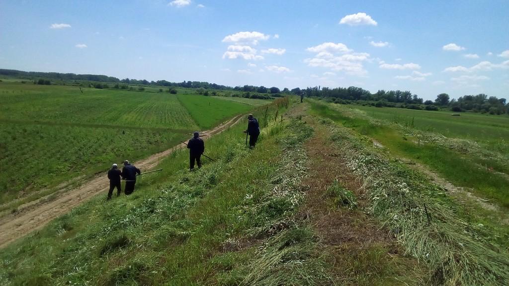 На Виноградівщині обкошують дамби і канали від трав'яної рослинності