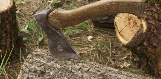 На Закарпатті судитимуть лісопорушника, який погрожував правоохоронцям вбивством