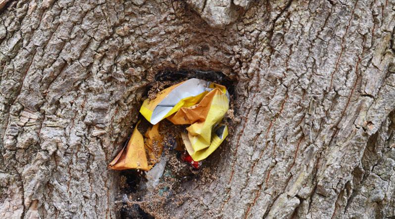 Ужгородці придумали наносмітники – у деревах