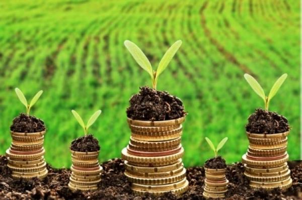 До місцевих бюджетів Рахівщини надійшло понад 5 млн грн. земельного податку