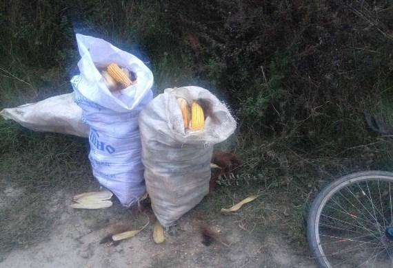 Закарпатець намагався вкрасти кукурудзу