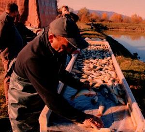 У водоймах Закарпаття будуть товстолоби, коропи та білий амур