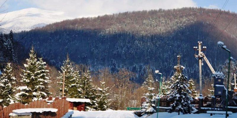 Директор Міжгірського лісового господарства розповів про роботу вартових лісу