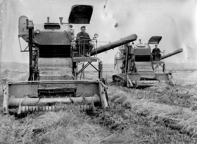 У Виноградівському районі півстоліття тому вирощували рис (фото)