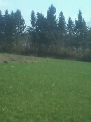 На Хустщині спостерігався деревопад (фото)