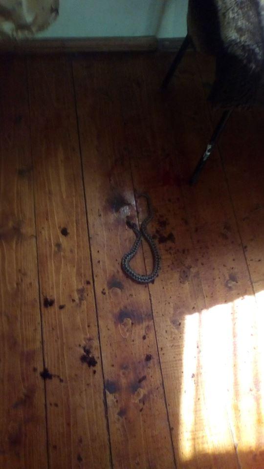 На Рахівщині змія заповзла до будинку (ФОТО)