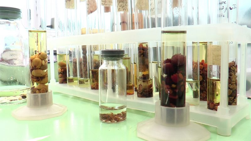 Закарпатські лікарі попереджають про навалу інфекційних кліщів (ВІДЕО)