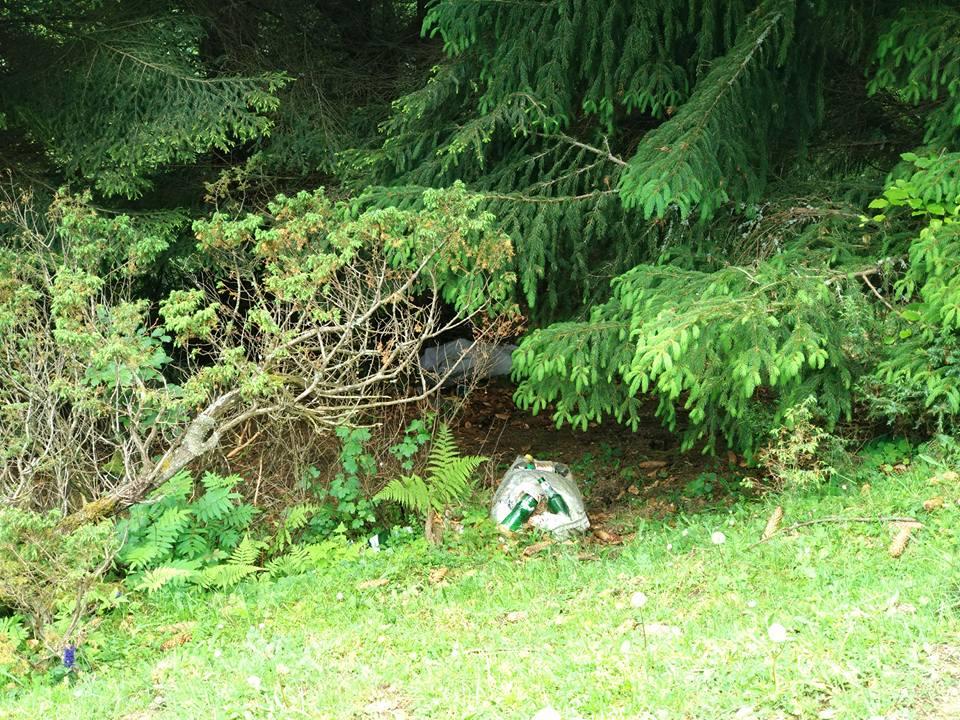 Що росте під ялинками на Синевирі – соцмережі (ФОТО)