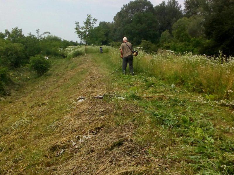Виноградівські водники ведуть боротьбу з борщівником та амброзією (ФОТО)