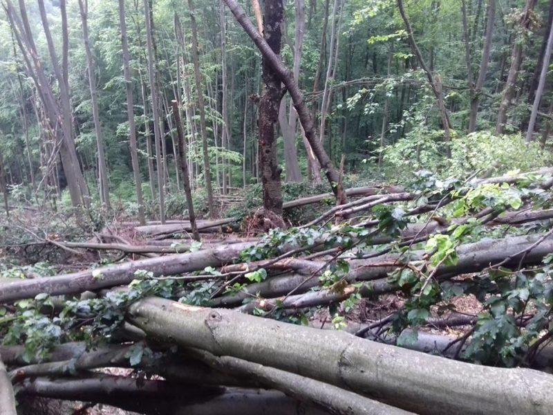 Наслідки буревію: Хустський лісгосп рахує збитки (ФОТО)