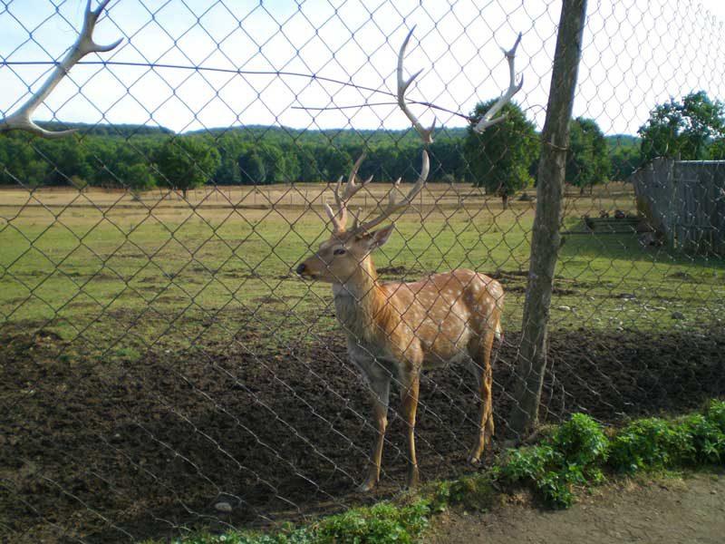 Єдина , не тільки на Закарпатті а й в Україні, оленяча ферма