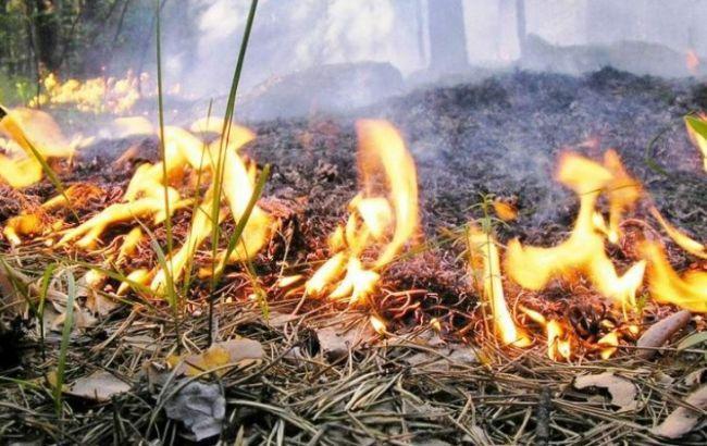 Рятувальники попередили про надзвичайний рівень пожежної небезпеки на Закарпатті