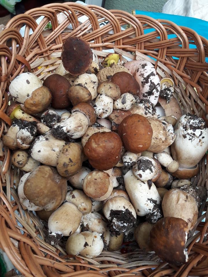 Негода не завадила закарпатці назбирати гриби