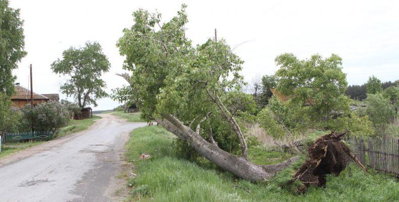 Деревопад стався в декількох районах Закарпаття