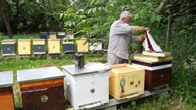 На Закарпатті бджолярі побоюються масового вимирання роїв
