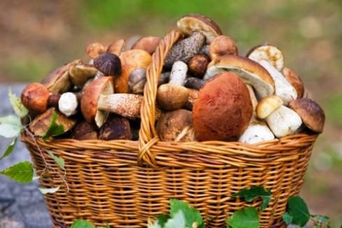 Сезон грибів на Закарпатті