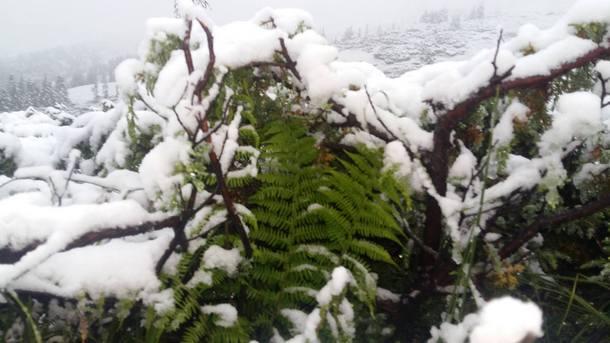 На Закарпаття з Європи йде похолодання, у горах ймовірно сніжитиме