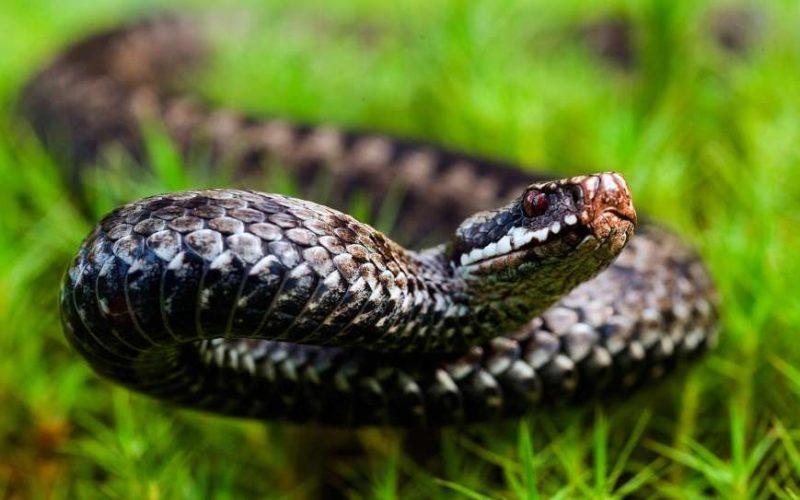Лікарі борються за життя жінки, яку в Карпатах вкусила змія