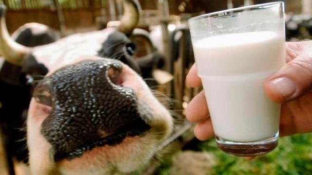 В Україні заборонили продаж домашнього молока та м'яса