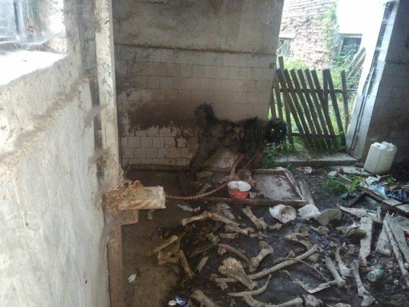На Міжгірщині нелюди залишили собаку помирати на прив'язі (фото 16+)