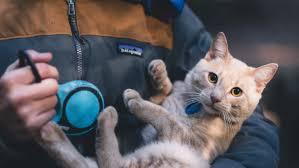 Яку небезпечну інфекцію можна підчепити від кота