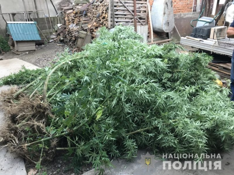 Поліцейські Виноградова виявили заборонений «урожай» (ФОТО)