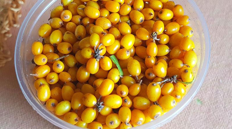 На Закарпатті вже продають ще одну ягоду із скарбнички вітамінів