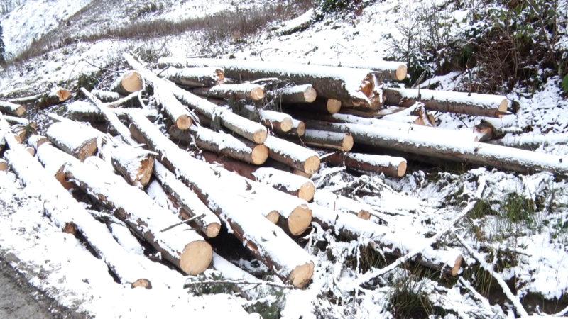 Лісівники Рахівщини розчищають ліс від завалів (ВІДЕО)