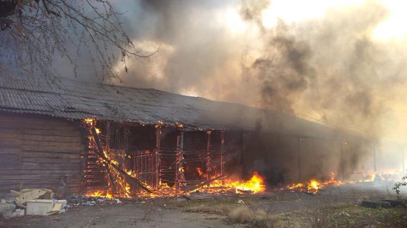 З'явилися перші подробиці великої пожежі у Виноградові біля електропідстанції (ФОТО/ВІДЕО)