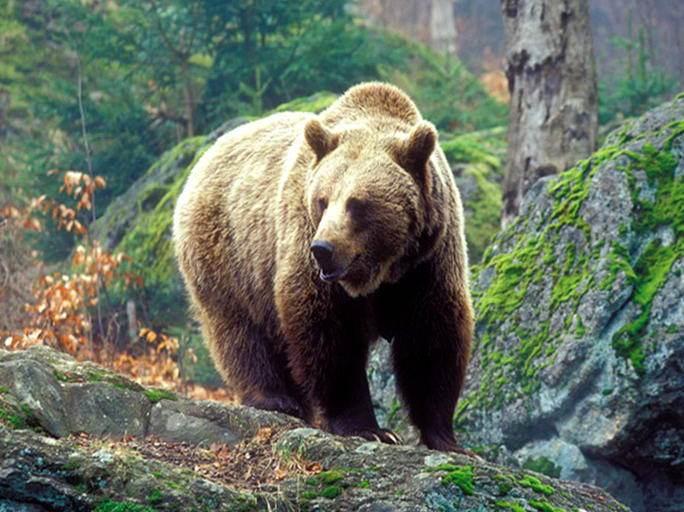 Осінній раціон: чим годують ведмедів у Синевирському реабілітаційному центрі?