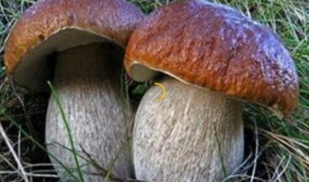 Закарпатець на тихому полюванні зірвав грибний джекпот (ФОТО)