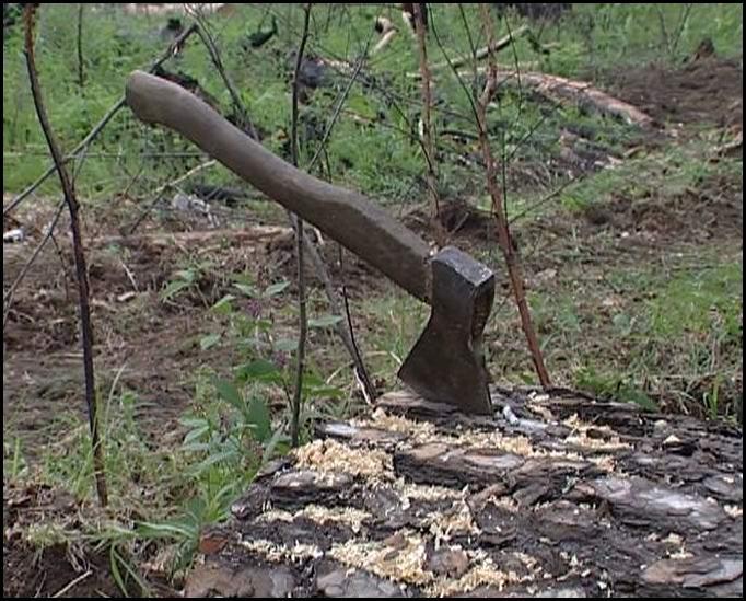 На Рахівщині місцевому підприємцю оголошено про підозру у незаконній порубці дерев вартістю понад 650 тис грн