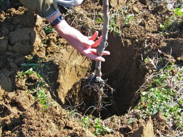 Не лише вирубувати, а й садити: виноградівські лісівники протягом року проводили відтворення лісів
