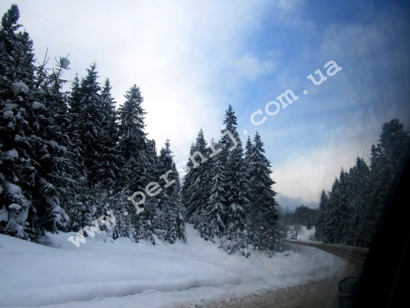 Зимова казка на Закарпатті: Срібна земля, яку варто побачити кожному (ФОТО)