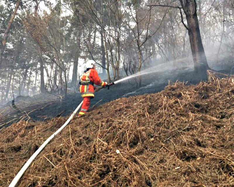 На Закарпатті вигоріли майже 20 гектарів земель в екосистемах (ФОТО)