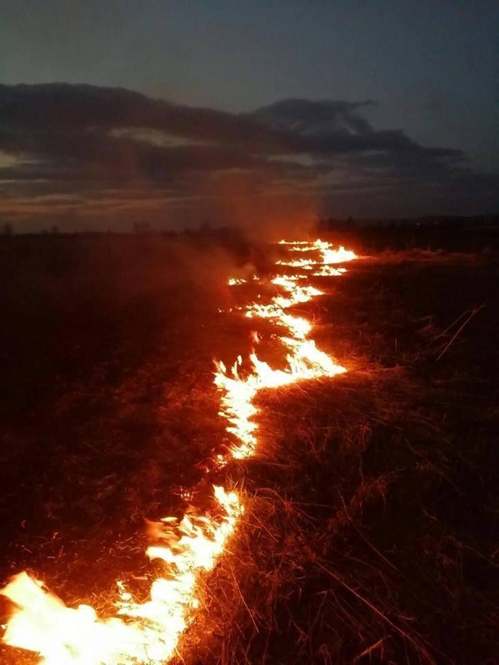 Вісім пожеж сухої трави за вихідні ліквідували рятувальники на Виноградівщині (ФОТО)