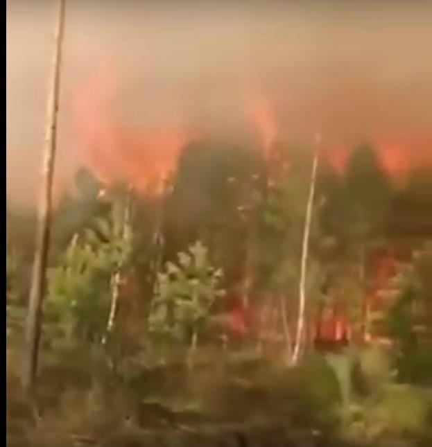 Масштабна пожежа: горить один з найбільших заповідників України (ВІДЕО)