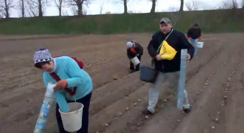 """Закарпатцям рекомендують """"новітню"""" технологію посадки картоплі (ВІДЕО)"""