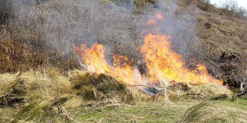 На Тячівщині боролись з вогнем який ледь не знищив лісовий масив