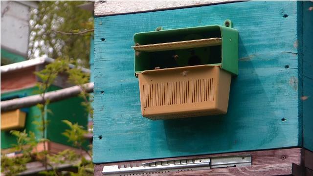 На Міжгірщині пасічники планують відродити втрачений тип колочавської бджоли (ВІДЕО)