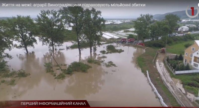 Життя на межі: аграрії Виноградівщини підраховують мільйонні збитки