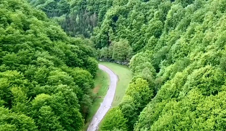 В мережі оприлюднили вражаюче відео закарпатських лісів з висоти пташиного польоту (ВІДЕО)