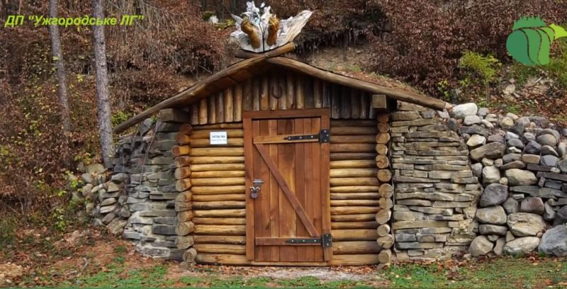 Лісовий музей просто неба на Закарпатті (відео)