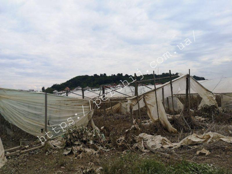 Цьогоріч збирати буде нічого: паводок знищив тонни урожаю на Виноградівщині (ФОТО)