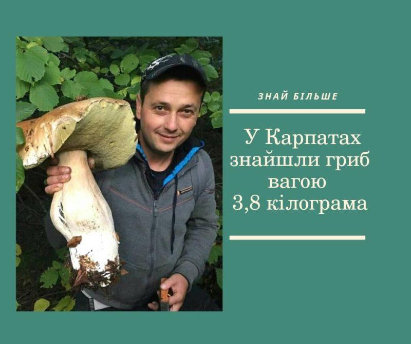 Гігантський гриб знайшли в Карпатах