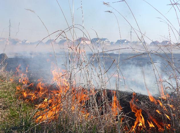Кинутий сірник, недопалок, тліюче вогнище: на Закарпатті знову пожежна небезпека