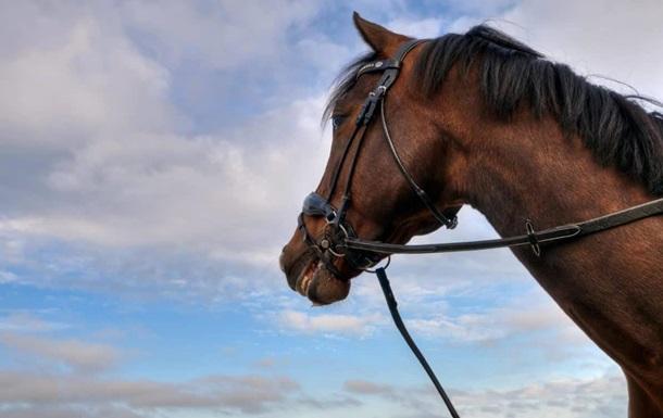 Знайшли тіло 14-річної дівчини, прив'язане до коня