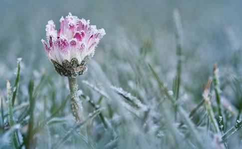 Весна відкладається: на Закарпаття йдуть заморозки
