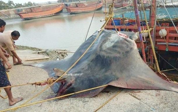 Добрячий улов: рибалки впіймали рідкісну рибу вагою 900 кілограм (ФОТО, ВІДЕО)