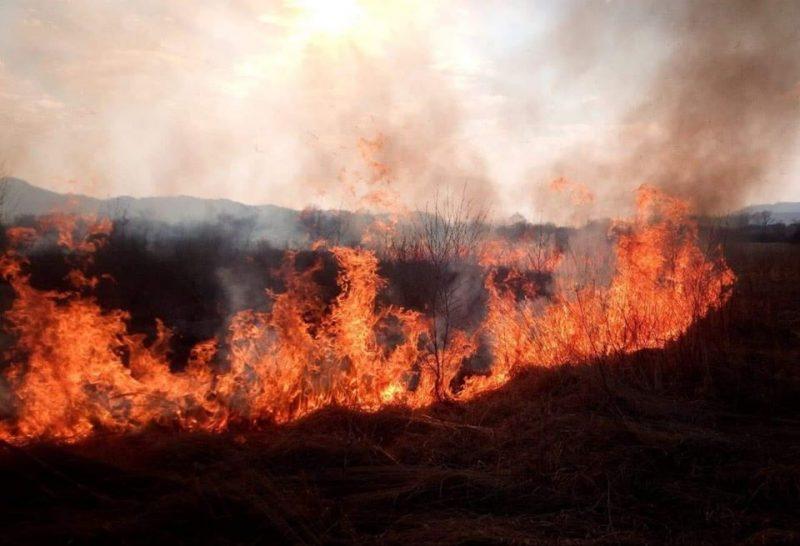 """""""Родзинку"""" Закарпаття – знищено: Рятувальники показали наслідки пожежі в Долині нарцисів на Хустщині (ФОТО)"""